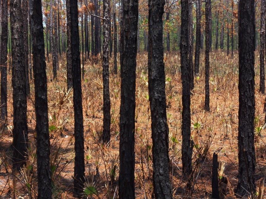 Body of Bradenton Woman Found Burning inWoods