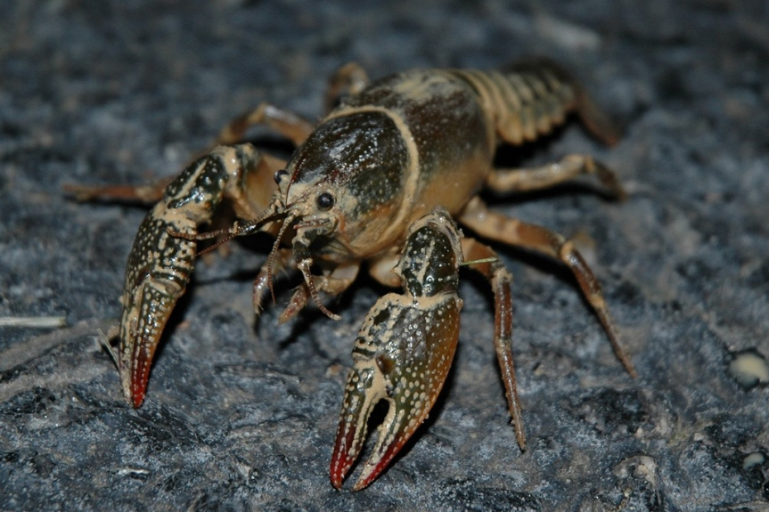 What to Sacrifice to the Craw-God Before Hunting for Mudbugs with yourKids